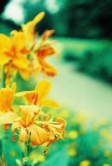 singapore botanic gardens / yashica electro 35 gn / fuji sensia 200 / xpro (tikayiyay) Tags: garden iso200 xpro singapore fuji rangefinder yashica sensia expiredfilm top20xpro singaporebotanicgardens yashicaelectro35gn fujisensiaii200rm