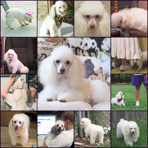 A Tribute to Ivory, 1996 - 2008
