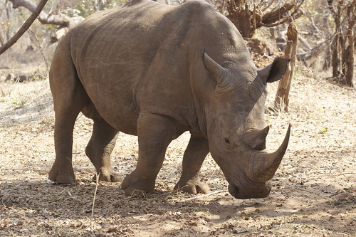 White Rhino by SarahDepper, on Flickr