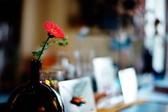 still life (moaan) Tags: leica flower digital 50mm bottle cafe flora dof bokeh f10 m8 vase noctilux 2008 garbera explored whiskybottle leicam8 leicanoctilux50mmf10 bokehwhores albiotcafe gettyimagesjapanq1 gettyimagesjapanq2