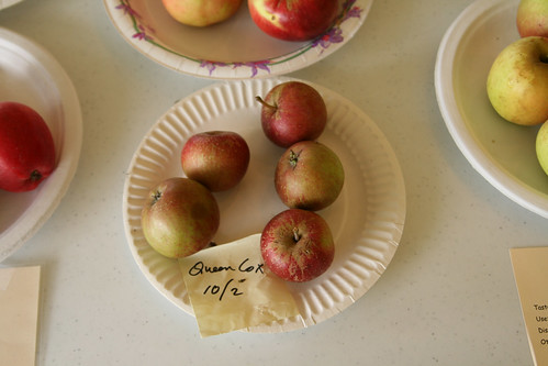 Queen Cox - Vashon Grown Apples and Fruit on Display
