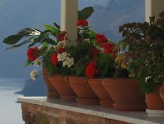 Plants and caldera