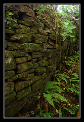 Wall (mclarenjk) Tags: wood uk autumn trees nature leaves wall wales forest woods wildlife tinternabbey tintern monmouthshire autumnwatch