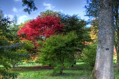England's Glory (Nala Rewop) Tags: autumn fall colors leaves colours arboretum westonbirt mywinners