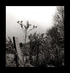 IMG_3577a (Kurt Faler) Tags: winter blackandwhite snow fence weeds greysky