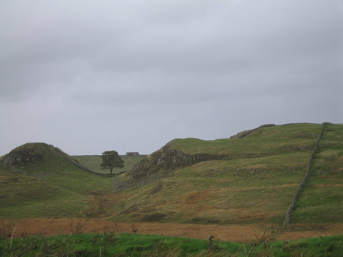 sycamore gap from the car