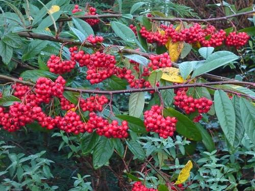 Berrys