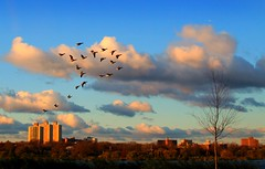Take me higher (Lazyousuf) Tags: nyc morning birds sunrise canon duck flushingmeadows canonef28135mmf3556isusm 50d explored explore27 canon50d lenscraft sunrisebirds