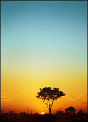 sunset & tree (bnilesh) Tags: indore soe supershot abigfave soeabigfaveanawesomeshot