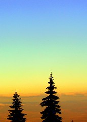 Spruces at sunset (Stella VM) Tags: trees sky mountain color colour tree nature beautiful beauty pinetree clouds forest landscape rainbow sofia magic bulgaria wonderland bulgarian vitosha aleko abigfave impressedbeauty theunforgettablepictures goldstaraward