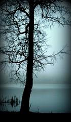 Tree (markku mestila) Tags: lake tree fall nature wet fog finland watter feelsgood elitephotography dragondaggerphoto dragondaggeraward zensationalworld amazingeyecatcher