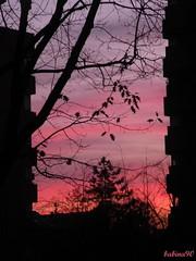 Milano... (Barbara Franceschini ) Tags: pink sunset sky alberi tramonto milano violet rosa cielo 2008 viola rami silhouettephotography nikonp80 barbarafranceschini