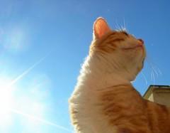 Enjoying the bright Italian sun on a cold winter's day.... (pippy & timmy) Tags: blue winter sky italy orange cats sun rome cute sunshine cat outside ginger kitten balcony kitty kittens bluesky timmy sole gatto gatti gattino gattini cieloblu bellagiornata oreengeness