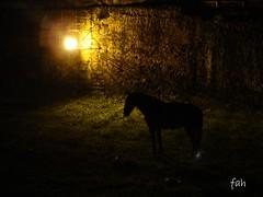 cavalo (fabriciabarcelos) Tags: estradareal sãojoãodelrei fahbarcelos