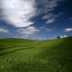 Stillness (Carlos Gotay Martnez) Tags: blue sky tree green field grass clouds solitude alone open space stillness abigfave colorphotoaward aplusphoto karmanominated platinumheartaward