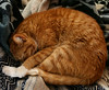 eric_feb2009 (twentypoundtabby) Tags: cat sleeeping