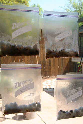 Earth Day Seed Experiment: Window Seeds