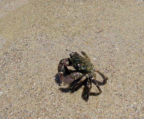 Hendry's Crab 1