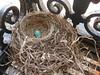 Nest: April 23