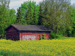 Unterschleiheim Barn (gatowlion) Tags: color colour barn germany bayern bavaria graffiti rape raps scheune unterschleissheim unterschleisheim