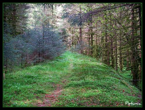 Gammel skogsvei