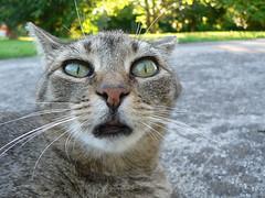 Cat or Alien?