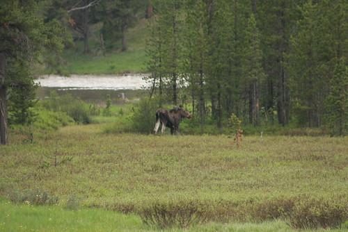 Montana June 208 133