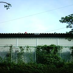 【写真】ミニデジで撮影した倉庫の上のボール達