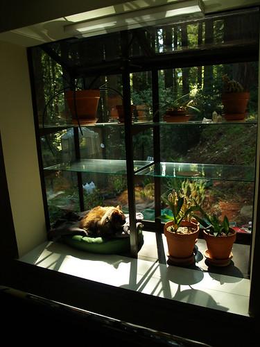 punk rock cat commandeers her portion of the window