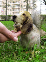 Bassetsquirrel (Sebastian Niedlich (Grabthar)) Tags: dog animal monster photoshop manipulated squirrel photoshopped hound manipulation freak basset mutant manip hybrid photoshopping mutation mutated grabthar sebastianniedlich