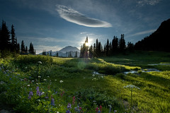 tipsoo meadow (Mike Hornblade) Tags: flowers sunset landscape washington nikon d70 meadow rainier lensflare 1224mmf4g wildflowers tipsoolake