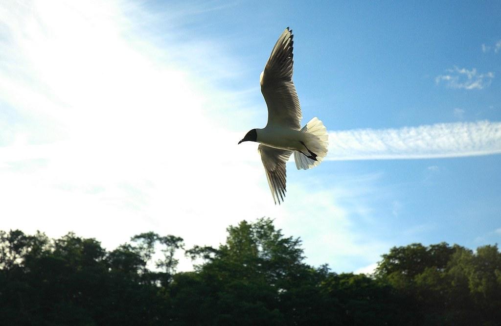 fågelen