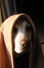 Obi Wan Dogobi