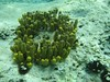 Huge sponge colony