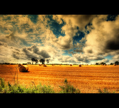 Point of View (Martyn Starkey) Tags: trees light england sky tree field clouds fields hay bales soe orton foreground themoulinrouge flickrsbest abigfave anawesomeshot colorphotoaward ysplix theunforgettablepictures theperfectphotographer goldstaraward alemdagqualityonlyclub photoexel goldenheartaward