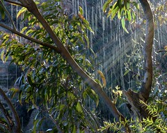 water and sun (ducktourer) Tags: trees sun water waterfall hiking walk australia bluemountains hike bushwalking nsw sunrays sunbeams hodgie underawaterfall valleyofthewaters ducktourer dropsfromabove nationalpasstrail