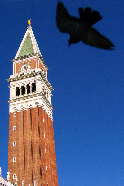 Campanile with Pigeon, Saint Mark's Square, Venice, Italy