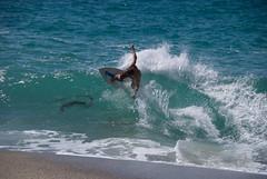 DSC_0735 (patronsaintjofro) Tags: beach skimboarding skim skimboard