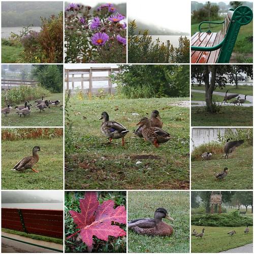 Quacked #3