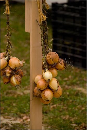 FarmersMaket2008 Hanging Onions