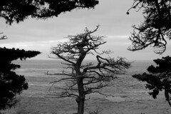 frame from trees (Nicola Zuliani) Tags: california trees usa nature water frame pacificcoast nizu nicolazuliani nnusa wwwnizuit