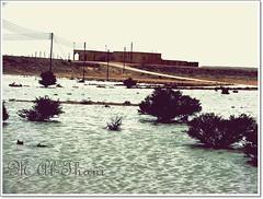 ,,       ,, (M.AL-Thani .. BRB) Tags: qatar  takenby  qtr      m6r  malthani 7aia