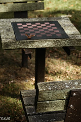 [40/365] Fall brings a lovely ambience (SortOfNatural) Tags: wood shadow fall birds bench table leaf nikon chess cast af d100 nikkor dslr sparrows ambience 28105mm project365 robertb