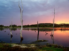 My Super Secret Sunset Spot (pominoz) Tags: trees sunset reflection newcastle dead pond grandmother nsw bigmomma teralba