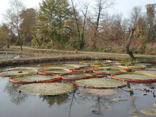 Kenilworth Aquatic Garden 019