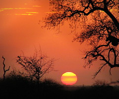 The Dawn of a New Day (Sandra Leidholdt) Tags: africa morning sky sun silhouette sunrise southafrica dawn soleil silhouettes explore ciel za siluetas sdafrika krugernationalpark kruger satara knp  afriquedusud lafrique zuidafrika leverdusoleil sudfrica explored zuidafrica sandraleidholdt surfrica leidholdt sandyleidholdt