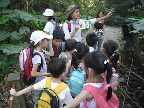 你拍攝的 23尋找台北樹蛙。