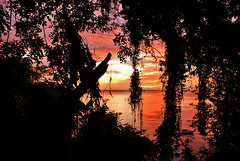 Sunset in Dominica (jendayee) Tags: trees sunset red sea sky black nature clouds frame dominica fineartphotos anawesomeshot