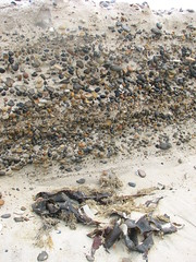 IMG_0396 (www.fotoNU.dk) Tags: beach nature denmark store natur large sten danmark stranden tang fotonu