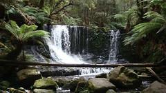 Horse Shoe Falls, Waterfall, Mount Field National Park, Tasmania, Australia (Annie MVN) Tags: waterfall australia tasmania 2008 mountfieldnationalpark